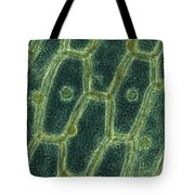 Iodine Stained Onion Cells Tote Bag