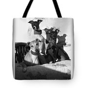 Italian Greyhounds In Black And White Tote Bag