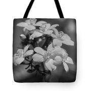 Jatropha Blossoms Painted Bw Tote Bag