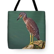 Juvenile Black Crowned Night Heron Tote Bag