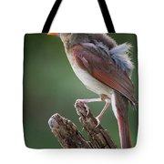 Juvenile Northern Cardinal Tote Bag