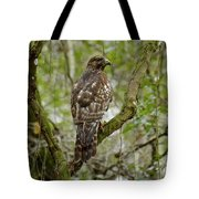 Juvenile Short-tailed Hawk Tote Bag