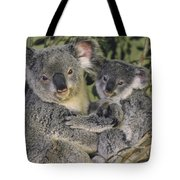 Koala Phascolarctos Cinereus Mother Tote Bag by Gerry Ellis