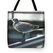 Laughing Gull Tote Bag