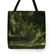 Lazy Afternoon Tote Bag