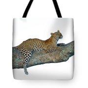 Leopard Panthera Pardus Sitting Tote Bag