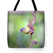 Lesser Goldfinch 4052 Tote Bag
