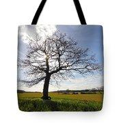 Lone Oak Tree In English Countryside Tote Bag
