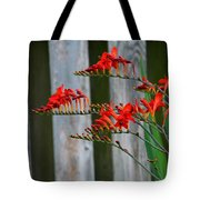 Lucifer Crocosmia By Fence Tote Bag