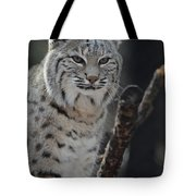 Lynx Perched In A Tree Tote Bag