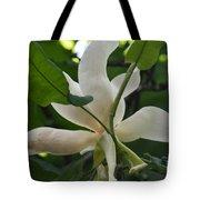 Magnolia Macrophylla Tote Bag