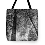 Majestic Trees Tote Bag