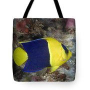 Malaysia Marine Life Tote Bag by Dave Fleetham - Printscapes