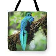 Male Quetzal Tote Bag