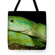 Marchs Palm Pitviper Tote Bag