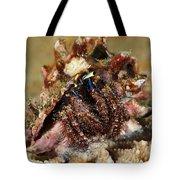 Marine Hermit Crab Tote Bag