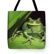 Marsupial Frog Gastrotheca Orophylax Tote Bag