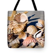 Mix Group Of Seashells Tote Bag