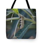 Monarch Catterpillar  Tote Bag