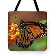 Monarch On Milkweed Tote Bag