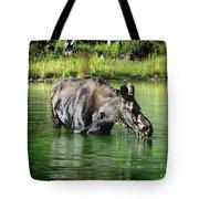 Moose In The Elk Creek Beaver Ponds Tote Bag