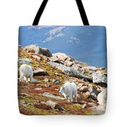 Mountain Goats On Mount Bierstadt In The Arapahoe National Forest Tote Bag