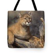 Mountain Lion Felis Concolor Tote Bag