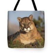 Mountain Lion Portrait North America Tote Bag