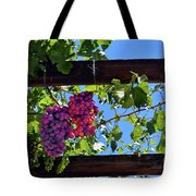Napa Valley Inglenook Vineyard -2 Tote Bag