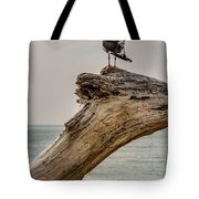 Gull On Driftwood Tote Bag