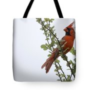 Northern Cardinal Portrait Tote Bag