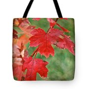 Ohio Autumn1 Tote Bag