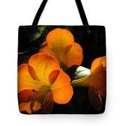 Translucent Tote Bag