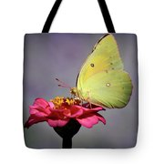 Orange Sulphur Butterfly Portrait Tote Bag