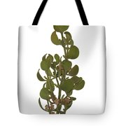 Pacific Mistletoe Tote Bag