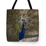 Peacock Close-up Tote Bag