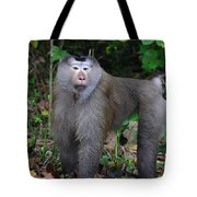 Pig-tailed Macaque Tote Bag
