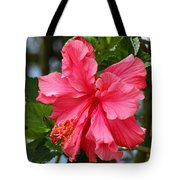 Pink Hibiscus Flower On A Tree Tote Bag