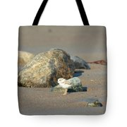 Plover Chick Tote Bag