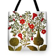 Pomegranate, 1613 Tote Bag