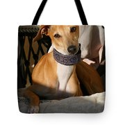 Portrait Of An Italian Greyhound Tote Bag