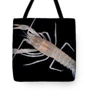 Prickly Cave Crayfish Tote Bag