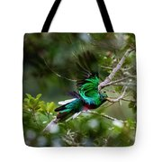 Quetzal In Costa Rica Tote Bag