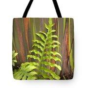 Rainbow Eucalyptus And Fern Tote Bag