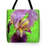 Raindrops On Purple And Yellow Iris Tote Bag