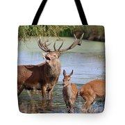 Red Deer In Bushy Park London Tote Bag