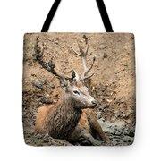 Red Deer Stag Cervus Elaphus Takes A Mudbath To Cool Down On Aut Tote Bag