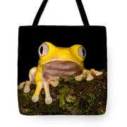 Red-eyed Treefrog, Xanthic Form Tote Bag
