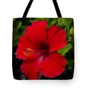 Red Hibiscus - Kauai Tote Bag