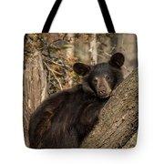 Resting Bear Tote Bag